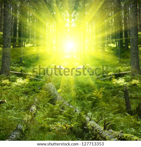 beautiful forest landscape in dusk time - stock photo