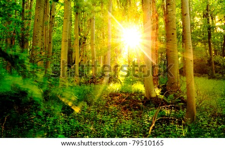 beautiful forest landscape in dusk time