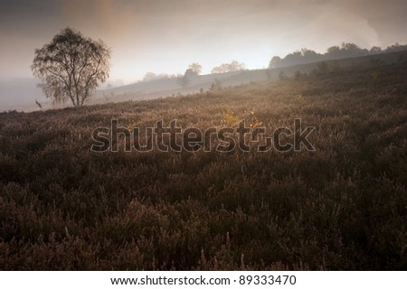 Beautiful forest landscape of foggy misty forest in Autumn Fall