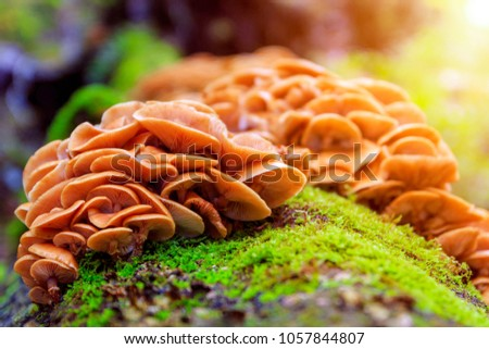 Beautiful forest mushrooms and moss on tree trunk. Close-up picture of the group mushrooms.