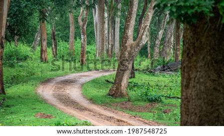 beautiful forest of Kabini Karnataka Zdjęcia stock ©