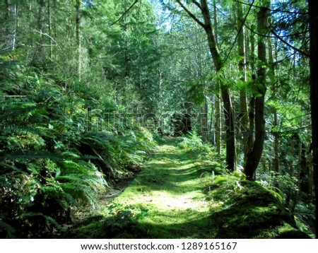 Beautiful forest of the Pacific Northwest #1289165167