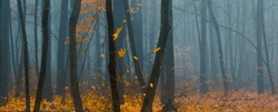 Beautiful forest on a foggy autumn day.  Fairy, autumnal mysterious forest trees with yellow leaves. Panoramic wide shot.