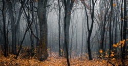 Beautiful forest on a foggy autumn day. Footpath in the dark, fairy, autumn, mysterious forest, among high trees with yellow leaves. Panoramic wide shot.