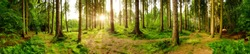 Beautiful forest panorama with bright sun shining through the trees