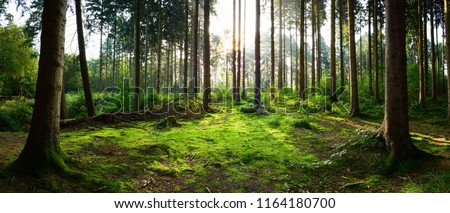 Beautiful forest panorama with bright sun shining through the trees 商業照片 ©