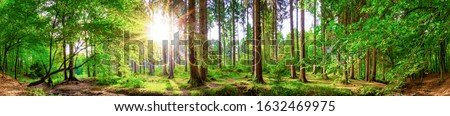 Beautiful forest panorama with large trees and bright sun 商業照片 ©