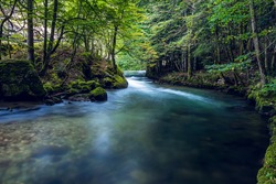 Beautiful forest river in the valley.