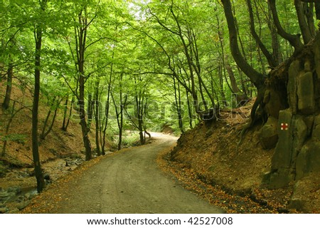Beautiful forest road trough summer forest
