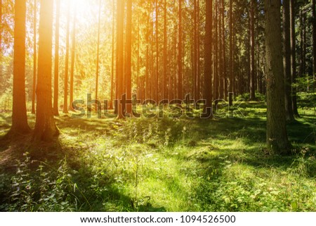 Beautiful Forest Scenery Woods Background #1094526500