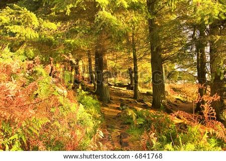 Shafts Of Light. Autumn shafts of light