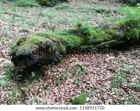 beautiful forest view with mossy fallen tree and fallen dry leaves and grass #1108931720