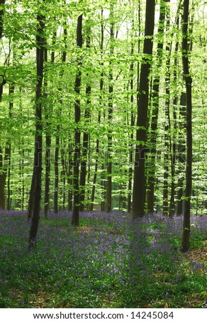 Beautiful forest with bright green leaves and purple flowers.