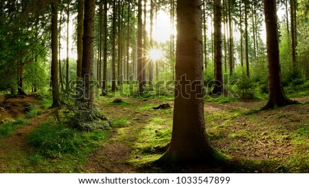 Beautiful forest with bright sun shining through the trees #1033547899