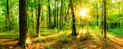 Beautiful forest with sun