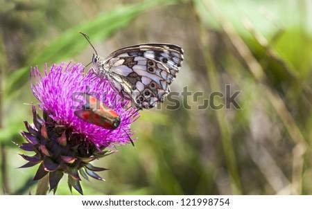 Beautiful fragile butterflies on a flower