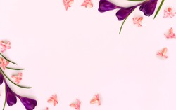 Beautiful frame of flower violet crocuses and pink hyacinths ( Hyacinthus ) on a pink paper background with space for text. Top view, flat lay