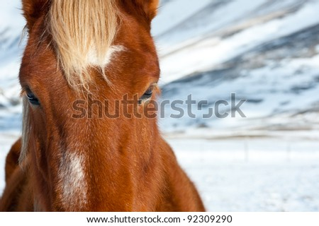 Beautiful free red stallion on a winter background.
