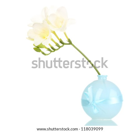 Beautiful freesia in vase isolated on white