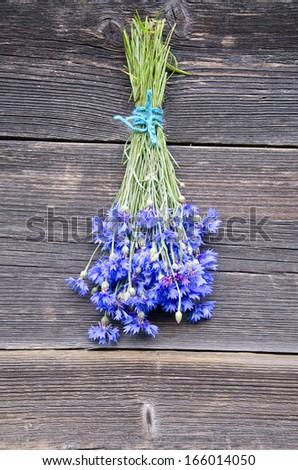 beautiful fresh cornflower medical herb bunch on old wooden farm wall