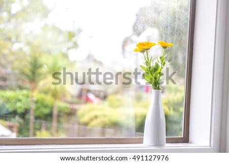 beautiful fresh flowers near window on rainy day view background #491127976