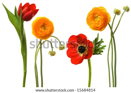 Beautiful fresh flowers on a white background