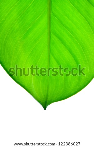 Beautiful fresh green leaf close up