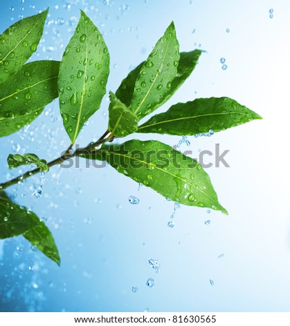 Beautiful Fresh Leaves with Water drops