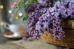 Beautiful fresh lilac flowers in rustic basket, porcelain English cup on old grunge wood background. Soft focus. Happy Mothers Day, Birthday, greeting card. English garden flowers, English tea concept