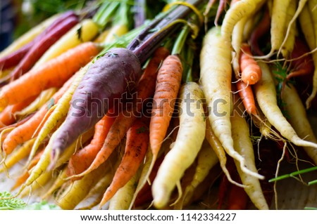 beautiful fresh market organic carrots in different colors, purple, white, orange red carrots on stems in big bunch closeup full frame healthy eating and healthy lifestyle vegetable photography #1142334227