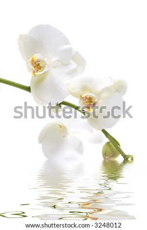 Beautiful fresh orchid with water reflection