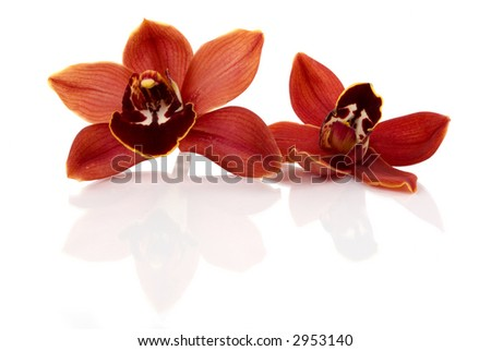 Beautiful fresh orchids - stock photo
