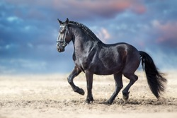 Beautiful frisian stallion run in sand against dramatic sky