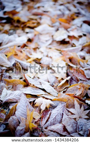 Beautiful Frosty Fall Leaves on the Ground #1434384206
