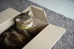 beautiful  Funny cat in box on wooden background