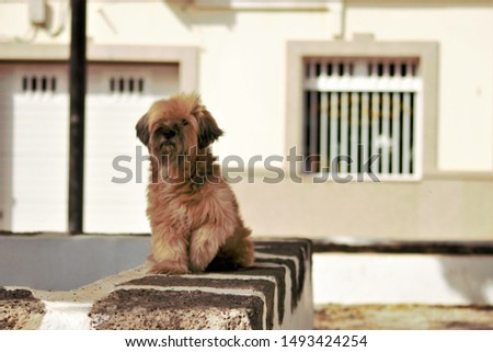 beautiful funny funny furry dog ​​with street background