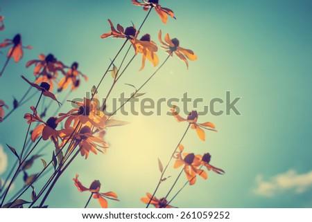 Shutterstock beautiful garden flowers