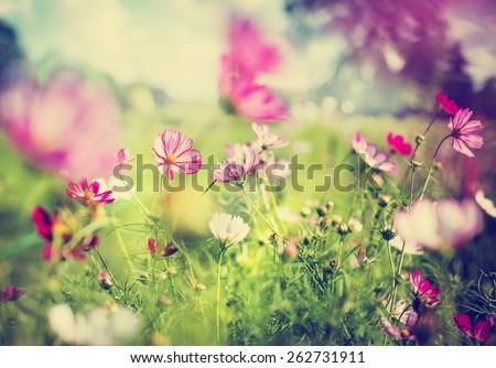 stock photo beautiful garden flowers 262731911 - Каталог — Фотообои «Цветы»