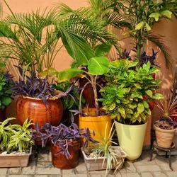 Beautiful garden. Green plants in pots. Nice patio.