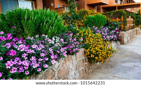 Beautiful Garden in summer chalet - read sea Egypt - summer vacation and beautiful scenery #1015642231