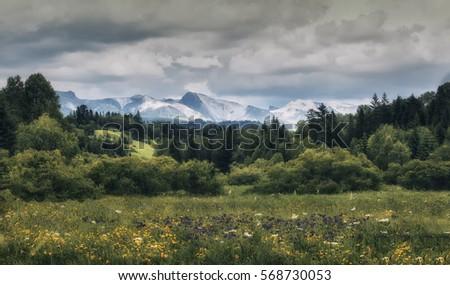 Beautiful garden-like forest in mountain