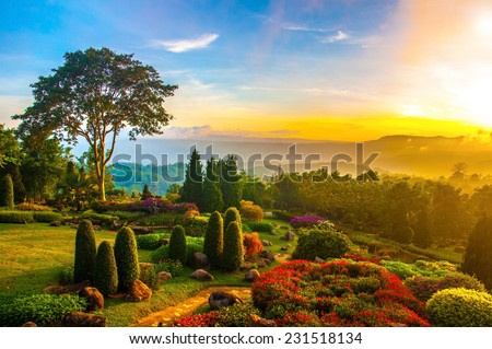 Beautiful garden of colorful flowers on hill with sunrise in the morning.