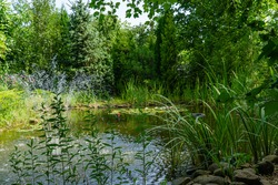Beautiful garden pond with stone banks and cascading fountain. Evergreen landscaped garden. Evergreens and aquatic plants are reflected in water surface. Atmosphere of calm and measured life.