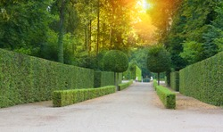 Beautiful garden with green hedges with trees and walking paths in the morning sun.