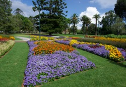 Beautiful garden with purple and yellow flowers in Toowoomba Carnival of Flowers