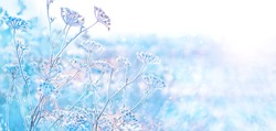 beautiful gentle winter landscape. frozen grass, natural winter seasonal background. cold frosty weather. new year and Christmas holiday concept. copy space