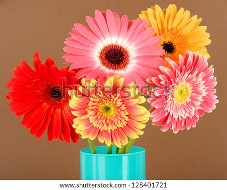 Beautiful Gerber flowers on brown background