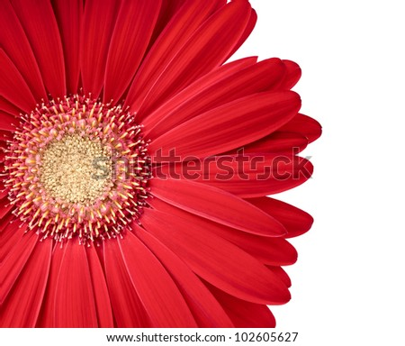 Beautiful gerbera flower isolated on white. Copy space for your text