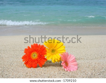 Beautiful gerbera flower on the beach