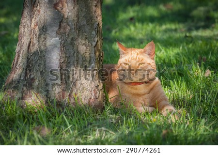beautiful ginger cat chilled out in the shade of a tree
